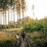 Złote godziny w Złotym Lesie